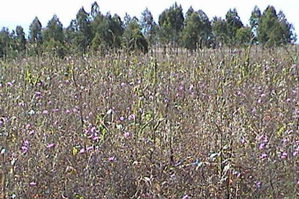 Foto de terreno comercial en venta en  , san francisco magu, nicolás romero, méxico, 5876131 No. 01