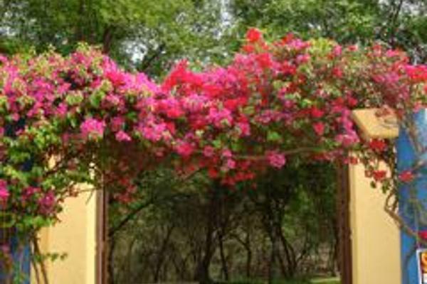 Foto de rancho en venta en  , san francisco, santiago, nuevo león, 2638111 No. 38
