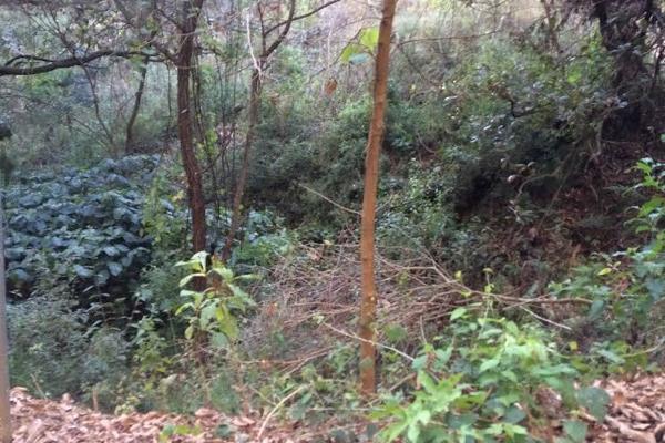 Foto de terreno habitacional en venta en carretera a colorines , san gaspar, valle de bravo, méxico, 2727628 No. 08