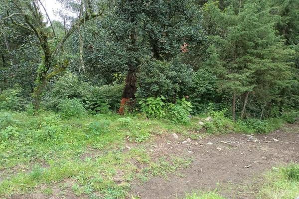 Foto de terreno habitacional en venta en  , san jacinto, atlautla, méxico, 14374200 No. 06