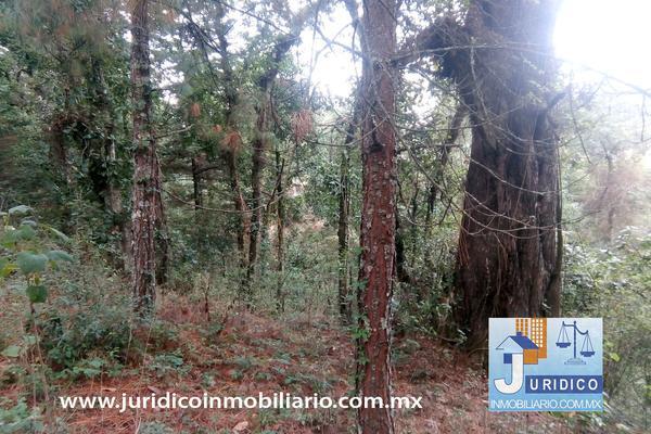 Foto de terreno habitacional en venta en  , san jacinto, atlautla, méxico, 14374200 No. 20