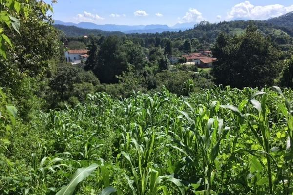 Foto de terreno habitacional en venta en san juan atezcapan , valle de bravo, valle de bravo, méxico, 3705392 No. 01