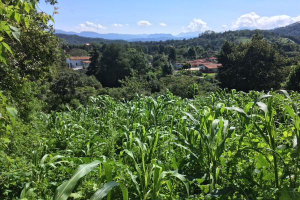 Foto de terreno habitacional en venta en san juan atezcapan , san juan atezcapan, valle de bravo, méxico, 5723613 No. 02