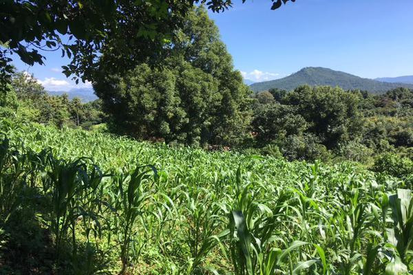Foto de terreno habitacional en venta en san juan atezcapan , san juan atezcapan, valle de bravo, méxico, 5723613 No. 06