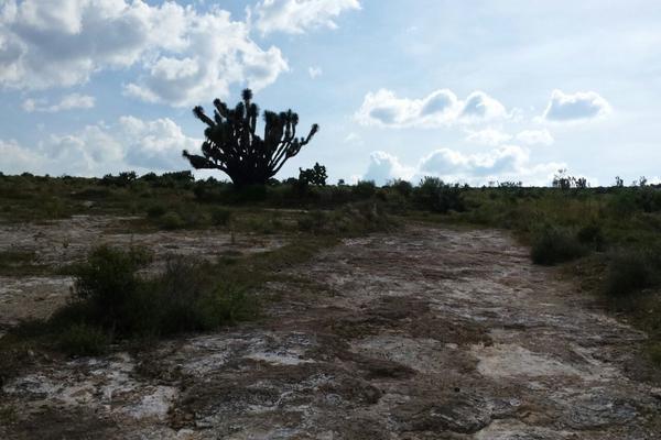 Foto de terreno habitacional en venta en  , san juan tilcuautla, san agustín tlaxiaca, hidalgo, 7304437 No. 07