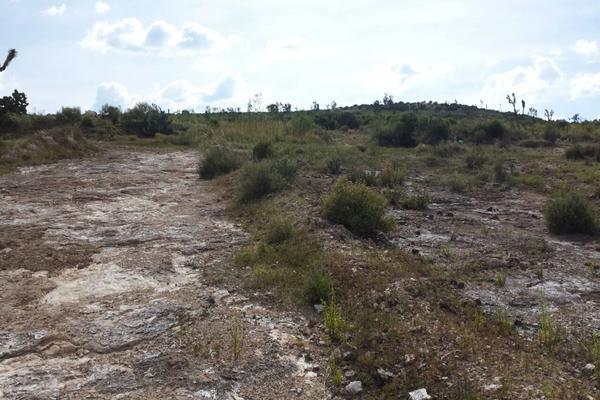 Foto de terreno habitacional en venta en  , san juan tilcuautla, san agustín tlaxiaca, hidalgo, 7304437 No. 30