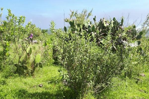 Foto de terreno habitacional en venta en  , san juanito itzicuaro, morelia, michoacán de ocampo, 8896525 No. 01