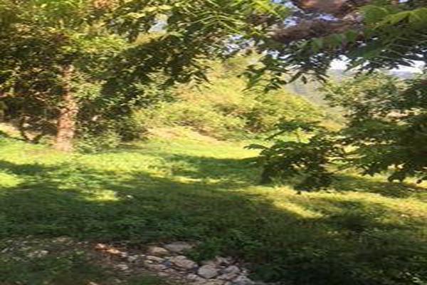 Foto de casa en venta en  , san miguel chimalapa, san miguel chimalapa, oaxaca, 11858608 No. 02