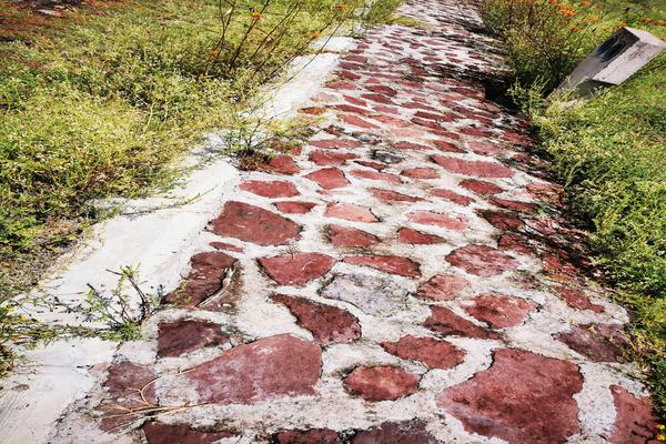 Foto de terreno habitacional en venta en  , san pedro, venustiano carranza, michoacán de ocampo, 19971328 No. 04