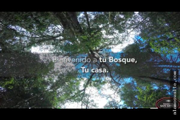 Foto de terreno habitacional en venta en  , san simón el alto, valle de bravo, méxico, 9305192 No. 05