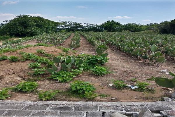 Foto de terreno habitacional en venta en santa barbara 3, san marcos, totolapan, morelos, 0 No. 05