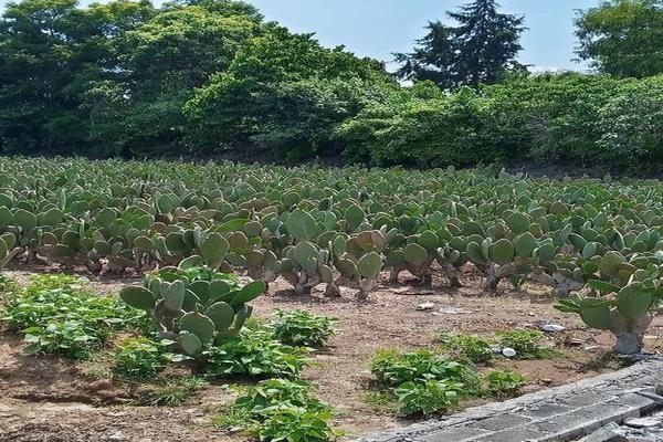 Foto de terreno habitacional en venta en santa barbara 3, san marcos, totolapan, morelos, 0 No. 07