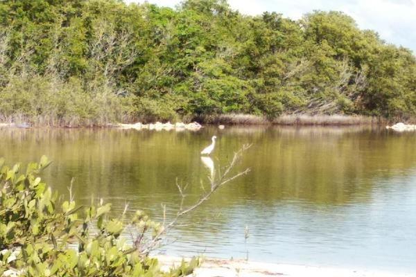 Foto de terreno habitacional en venta en  , santa clara, dzidzantún, yucatán, 0 No. 10