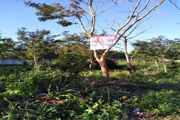 Foto de terreno habitacional en venta en  , santa cruz, tizimín, yucatán, 19948576 No. 02