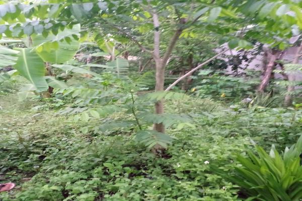 Foto de terreno habitacional en venta en  , santa cruz, tizimín, yucatán, 0 No. 08