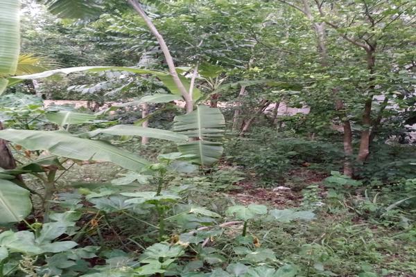 Foto de terreno habitacional en venta en  , santa cruz, tizimín, yucatán, 0 No. 09