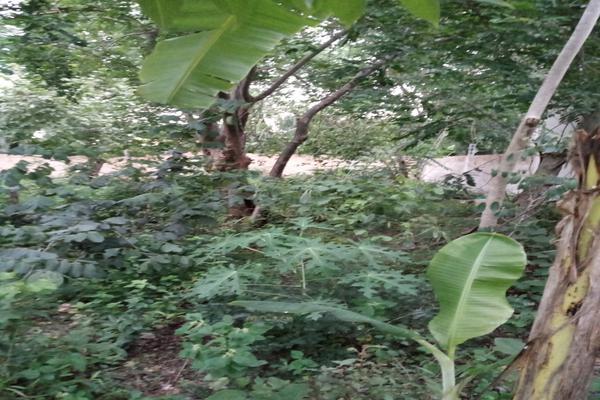 Foto de terreno habitacional en venta en  , santa cruz, tizimín, yucatán, 0 No. 13