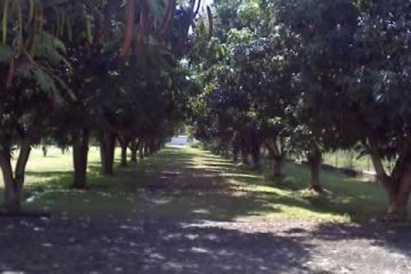 Foto de terreno habitacional en renta en santa ines 0, oacalco, yautepec, morelos, 2651272 No. 04