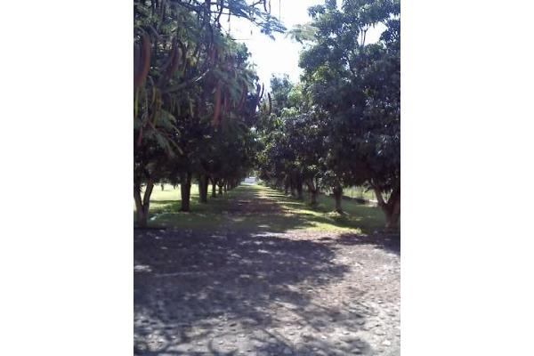 Foto de terreno habitacional en venta en santa ines 0, oacalco, yautepec, morelos, 2651296 No. 04