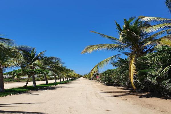 Foto de terreno habitacional en venta en  , santa maria, santa maría colotepec, oaxaca, 19702153 No. 06