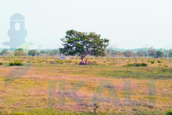 Foto de terreno habitacional en venta en  , santiago de la peña, tuxpan, veracruz de ignacio de la llave, 5857801 No. 12