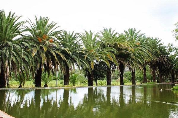 Foto de rancho en venta en santo domingo , zona centro, santa maría del río, san luis potosí, 19260424 No. 05