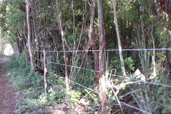 Foto de terreno habitacional en venta en s/c , aviación, tizimín, yucatán, 16261186 No. 01