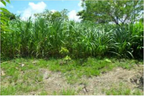 Foto de rancho en venta en s/c , encinal de ojapa, texistepec, veracruz de ignacio de la llave, 10098383 No. 10