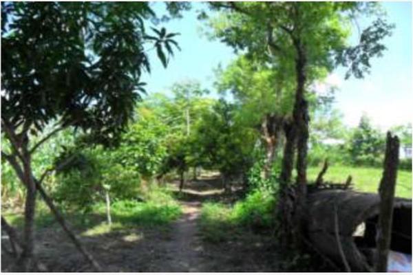 Foto de rancho en venta en s/c , encinal de ojapa, texistepec, veracruz de ignacio de la llave, 10098383 No. 13