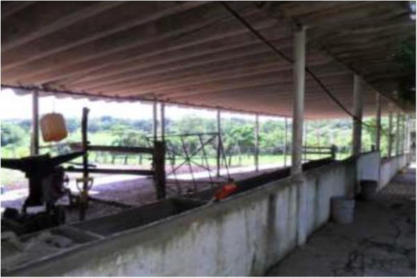 Foto de rancho en venta en s/c , encinal de ojapa, texistepec, veracruz de ignacio de la llave, 10098383 No. 14