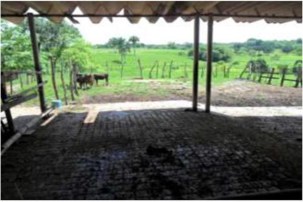 Foto de rancho en venta en s/c , encinal de ojapa, texistepec, veracruz de ignacio de la llave, 10098383 No. 15