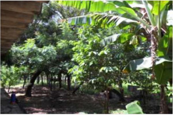 Foto de rancho en venta en s/c , encinal de ojapa, texistepec, veracruz de ignacio de la llave, 10098383 No. 17