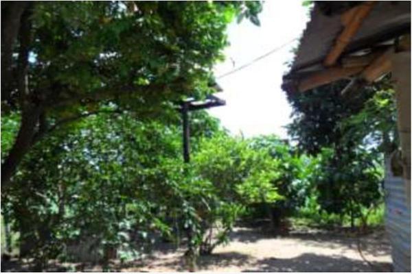 Foto de rancho en venta en s/c , encinal de ojapa, texistepec, veracruz de ignacio de la llave, 10098383 No. 23