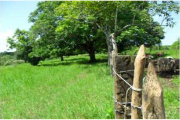 Foto de rancho en venta en s/c , encinal de ojapa, texistepec, veracruz de ignacio de la llave, 10098383 No. 26