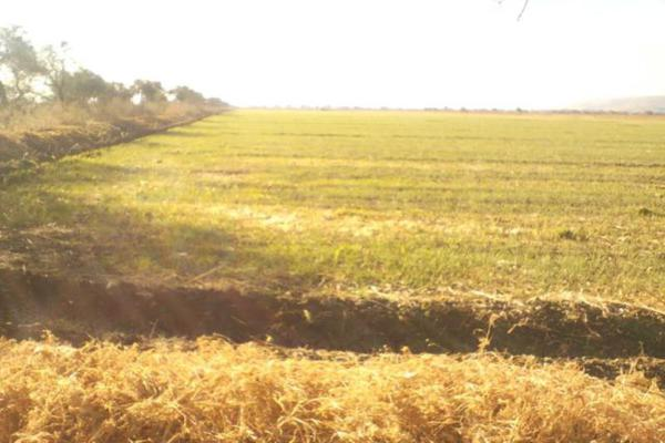 Foto de rancho en venta en s/e s/e, cuerámaro, cuerámaro, guanajuato, 4656604 No. 01