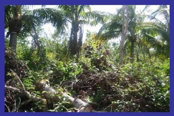 Foto de terreno habitacional en venta en sin calle , ixchel, benito juárez, quintana roo, 15039173 No. 07