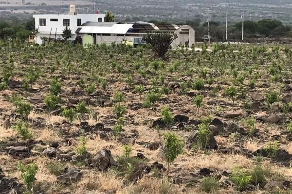 Foto de rancho en venta en sin nombre 0, el tejocote, tequisquiapan, querétaro, 3418855 No. 04