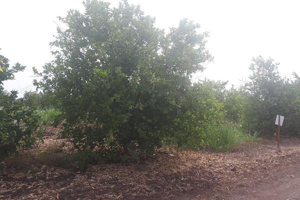 Foto de terreno industrial en venta en sin nombre , 18 de marzo, culiacán, sinaloa, 5929818 No. 02