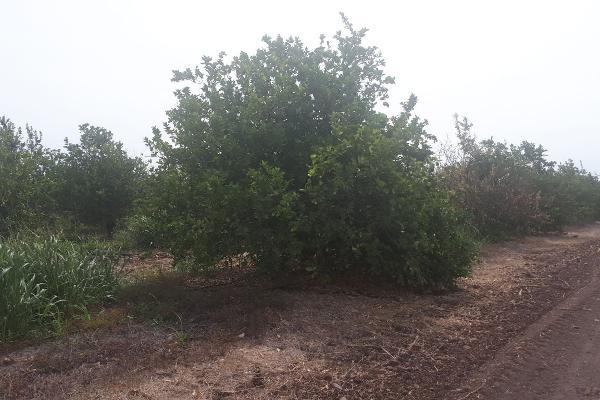 Foto de terreno industrial en venta en sin nombre , 18 de marzo, culiacán, sinaloa, 5929818 No. 04
