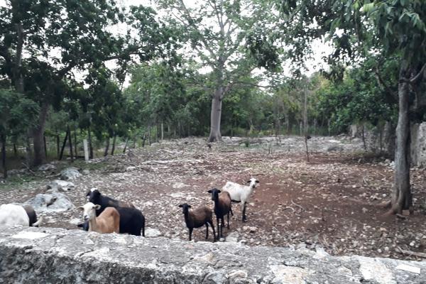 Foto de terreno industrial en venta en sin numero , san jose tzal, mérida, yucatán, 8122265 No. 09