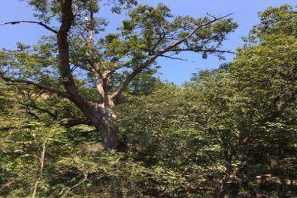 Foto de terreno comercial en venta en s/n , el barrial, santiago, nuevo león, 9972213 No. 12