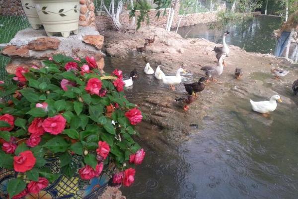Foto de rancho en venta en s/n , el refugio, peñón blanco, durango, 9987808 No. 06