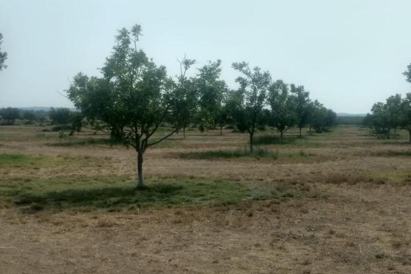 Foto de rancho en venta en s/n , la rosa, general cepeda, coahuila de zaragoza, 10050771 No. 04