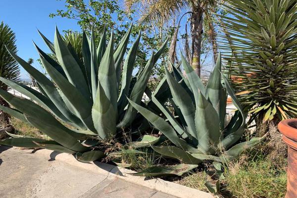 Foto de rancho en venta en sn , méxico, durango, durango, 17351767 No. 07