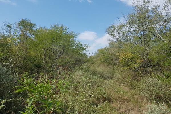 Foto de terreno comercial en venta en s/n , montemorelos centro, montemorelos, nuevo león, 9976320 No. 03