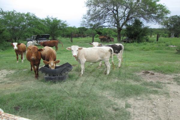 Foto de terreno comercial en venta en s/n , montemorelos centro, montemorelos, nuevo león, 9991458 No. 04