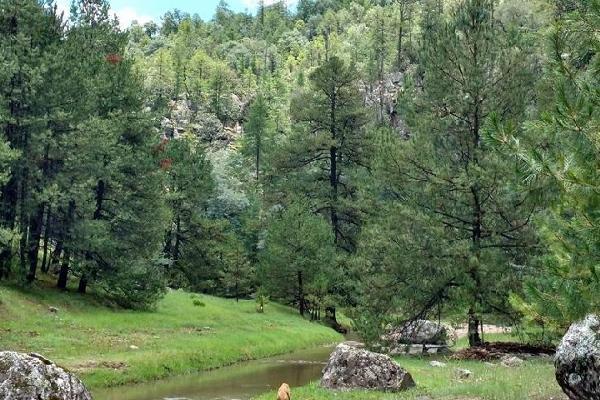 Foto de terreno comercial en venta en s/n , rancho laguna colorada de los lópez, durango, durango, 9971127 No. 03
