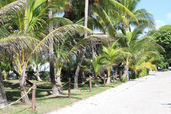 Foto de terreno habitacional en venta en  , solidaridad, solidaridad, quintana roo, 8297523 No. 02