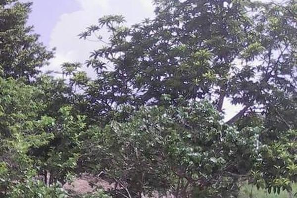 Foto de casa en venta en  , tibolon, sotuta, yucatán, 7975043 No. 13