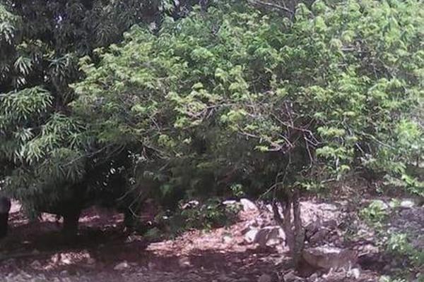 Foto de casa en venta en  , tibolon, sotuta, yucatán, 7975043 No. 17